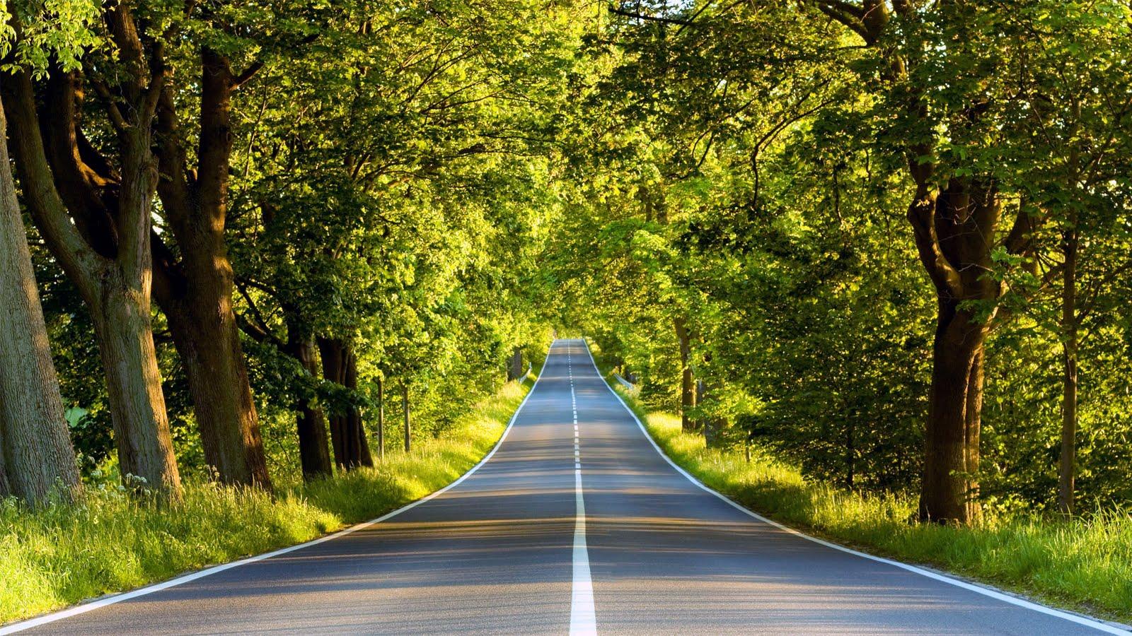 まっすぐな道の画像です。
