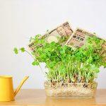 お金が育つイメージです。