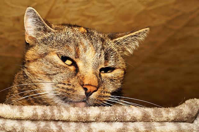 怪しい目つきの猫